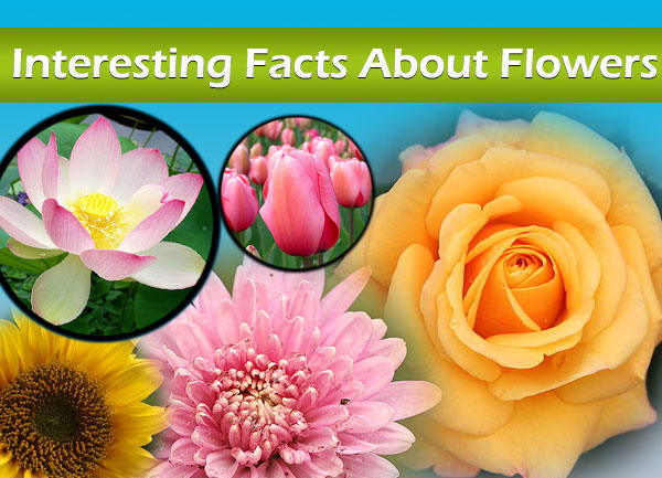 Photo of Interesting Facts About Flowers