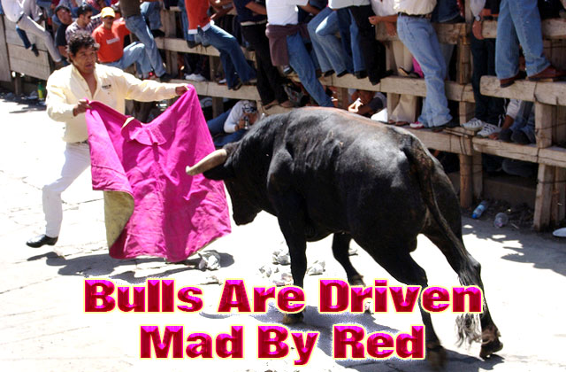 Bulls-are-driven-mad-by-red