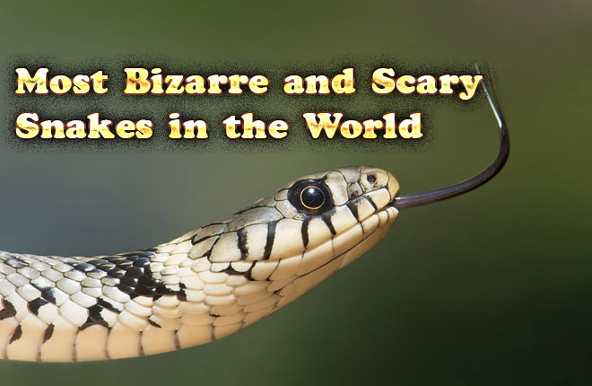 Photo of Most Bizarre and Scary Snakes in the World