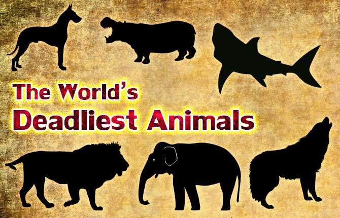 The-Worlds-Deadliest-Animals
