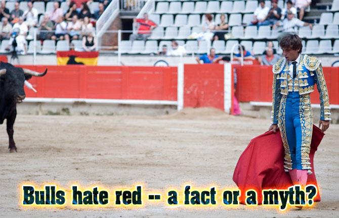 9-Bulls-hate-red
