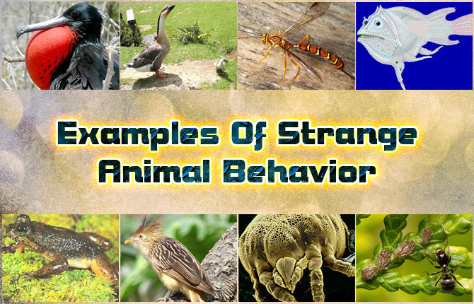 Photo of Examples of Strange Animal Behavior