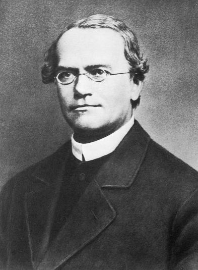 Founder of modern genetics – Gregor Mendel